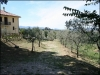 Olive trees around the structure