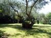 Ampio giardino privato
