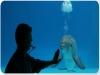 Spettacoli di delfini a Riccione