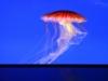 Meduse, Stelle Marine, Pesci Nemo