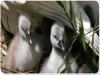 Fattoria con animali di ogni razza