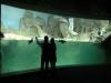 Specie protette all'Acquario di Genova
