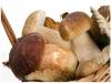 Degustazione menu a base di funghi.