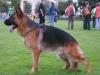 Fin von der Rodbaude, disponibili cuccioli in vendita